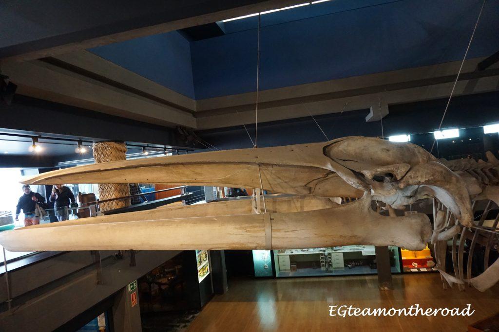 Esqueleto-de-ballena-Museo-Maritimo-de-Santander