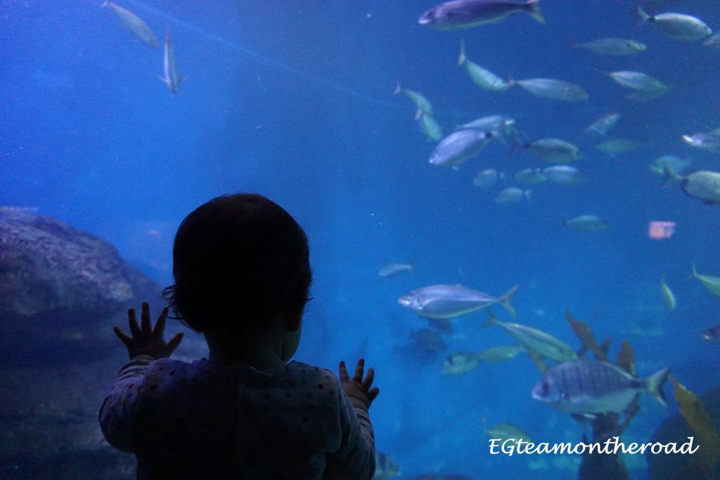 Nashira-alucinando-con-los-peces