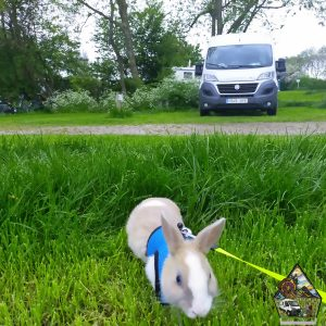viajar con conejo